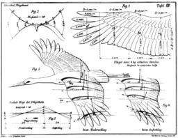 Themenfeld: Technische Lösungen nach Vorbildern aus der belebten Natur (Bionik)