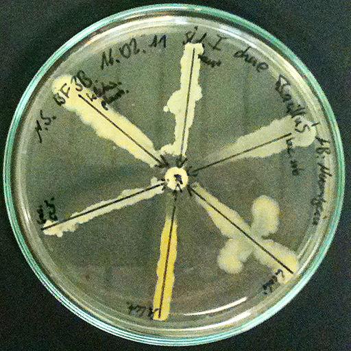 Antibiogramm Neomycin